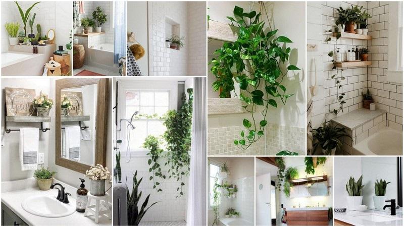 Τοποθετείστε κάποιο φυτό